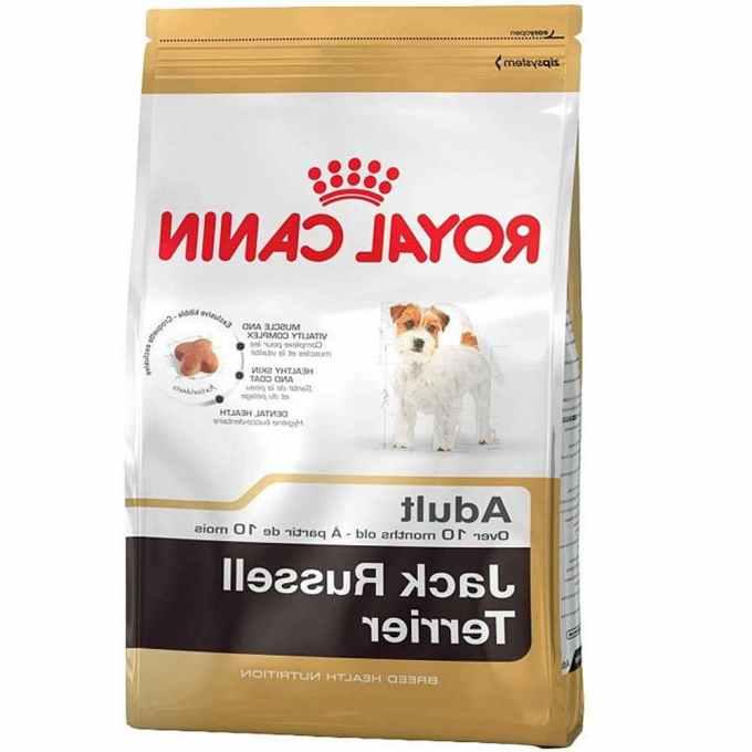 Jack Russell Terrier Food