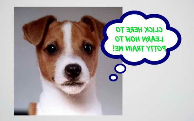 Jack Russell Terrier Potty Training