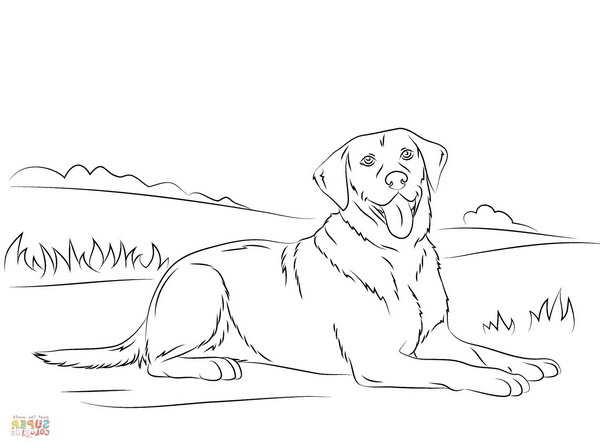 Labrador Coloring