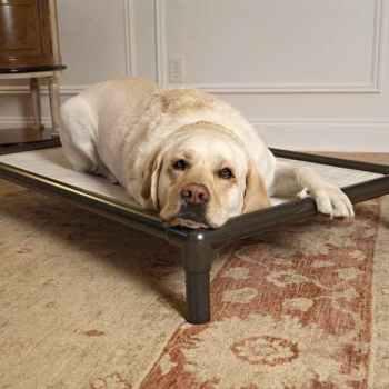 Labrador Dog Beds