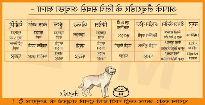 Labrador Dog Food Menu