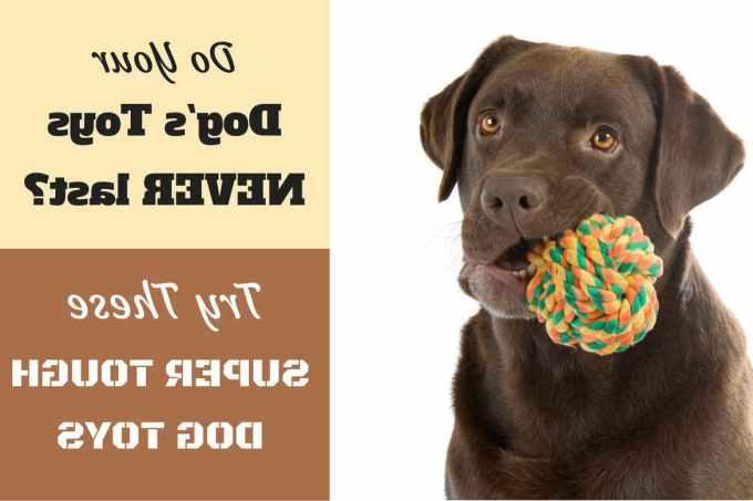 Labrador Dog Toys