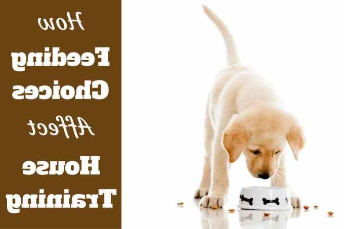 Labrador Puppies Food