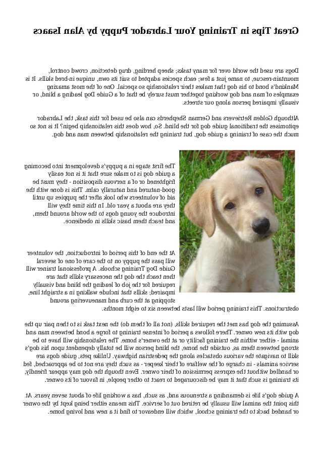 Labrador Training Tips