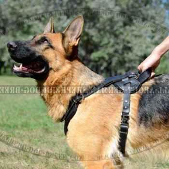Leather Dog Harness For German Shepherd