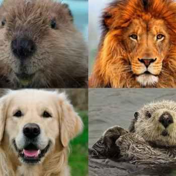 Lion Otter Beaver Golden Retriever Test