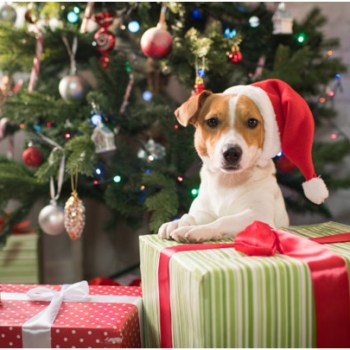 Perfect gift ideas for pet lovers