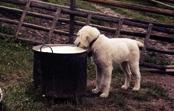 Changing Dog Food Cause Diarrhea