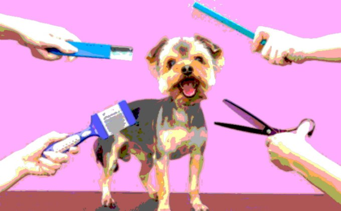 How Much Does A Dog Grooming Cost