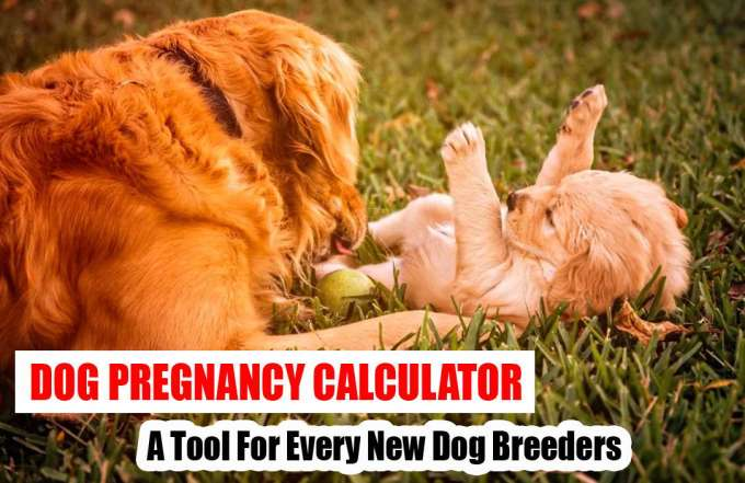Dog Pregnancy Calculator