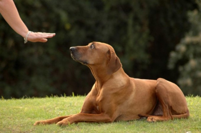 Should You Take Your Dog to Obedience School