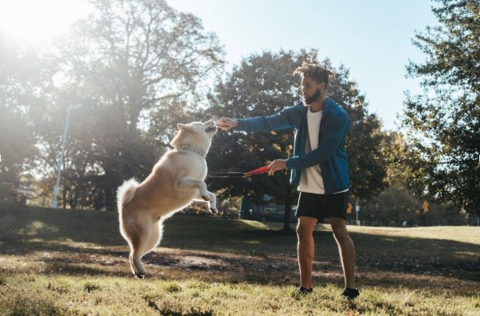 The Importance of Exercising With Your Dog