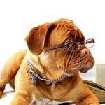 小動物介護士の資格と通信講座
