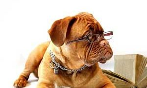 動物介護ホーム施設責任者資格と通信講座