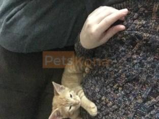 Cat female date of birth 08/06/19