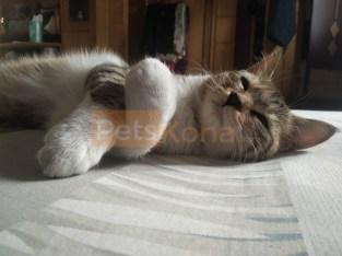 Cute cat for sale