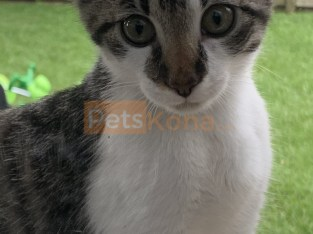 3month old kitten needs a good home