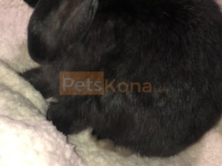 ISO home for bunny