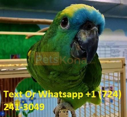 Beautiful Parrots And Fertile Parrot Eggs for Sale