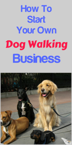 Start Your Own Dog Walking Business | Petslady.com