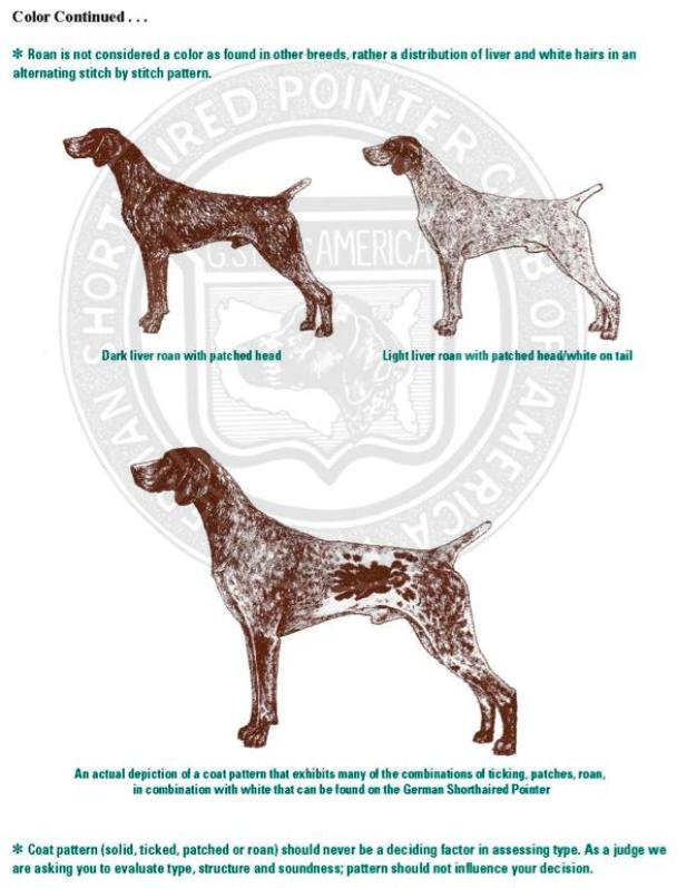 German Shorthaired Pointer: temperament, size, colors