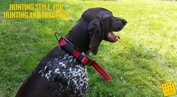 Best E Collar for German Shorthaired Pointer