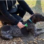 best brushes for german shorthaired pointer