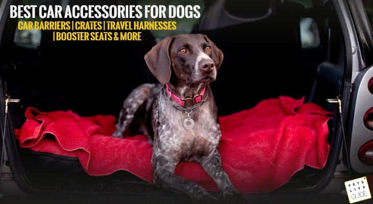 Best Car Accessories for Dogs