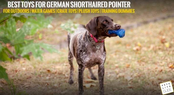 best toys for german shorthaired pointer