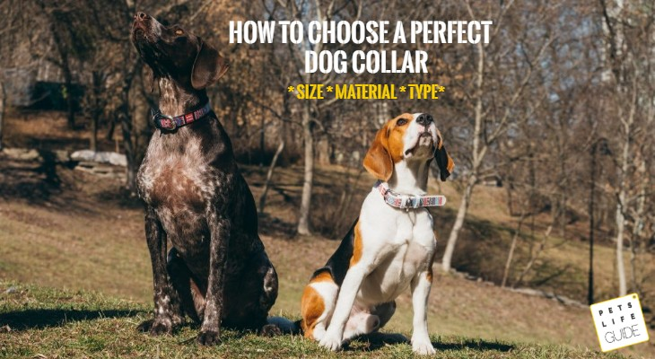 how to choose dog collar