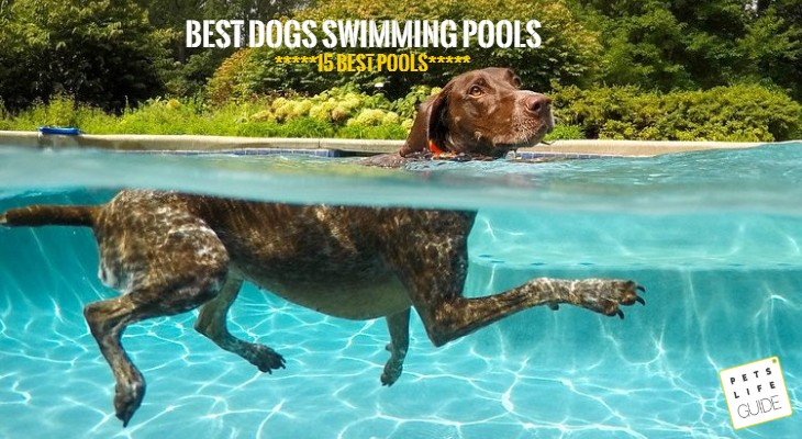 best swimming pools for german shorthaired pointer