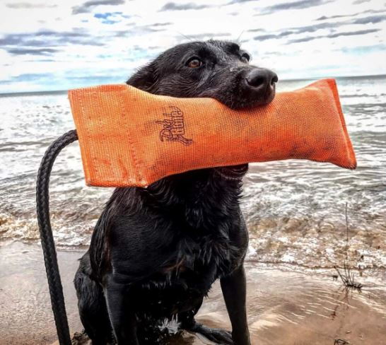 Dog Bone Bumber Training Dummy