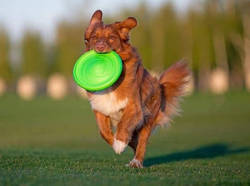 Flyer Dog Toys by Flyber Plus by ByCollar