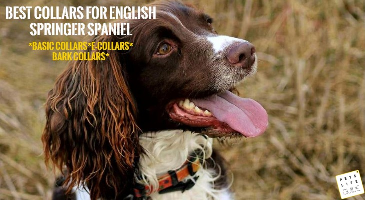 collars for springer spaniel