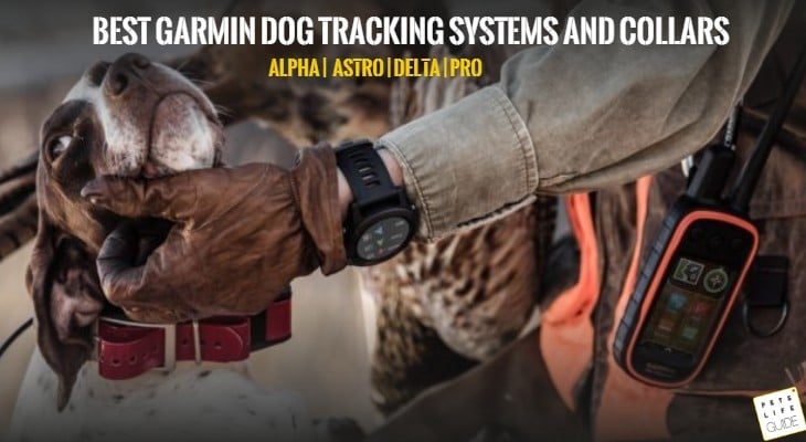 Best Garmin dog tracking systems and collars (2)