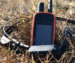 Garmin Alpha 100, Multi-Dog Tracking GPS and Remote Training Device in One