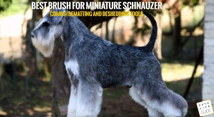 best brush for miniature schnauzer