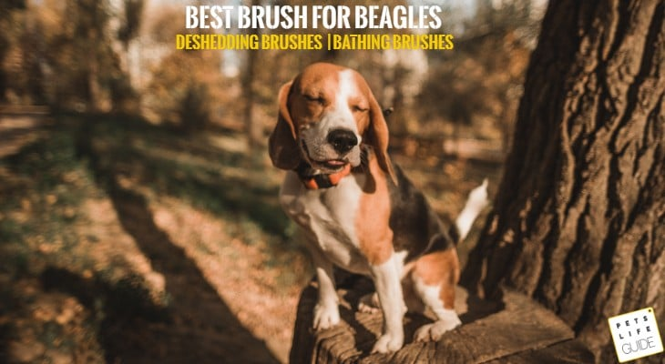 Best Brush for Beagle