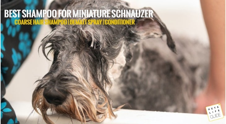 Best Shampoo For Miniature Schnauzer