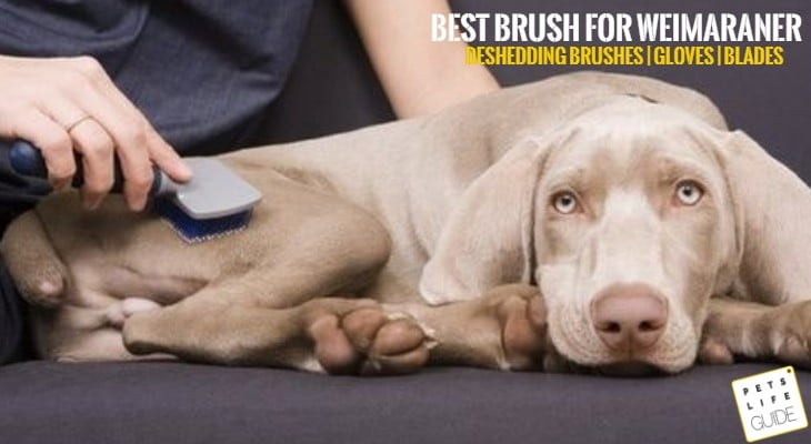 Best Brush for Weimaraner