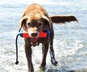 Chuckit! Amphibious Bumper Floating Fetch Toy