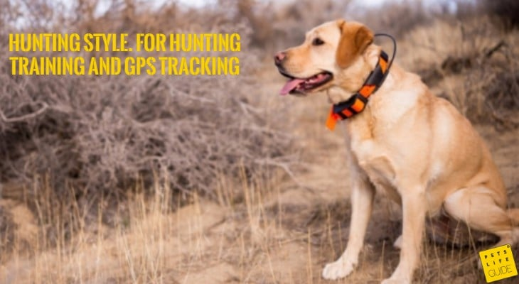 Hunting Training Collars