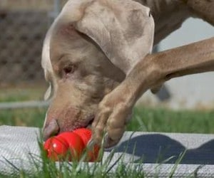 KONG Classic Dog Toy review