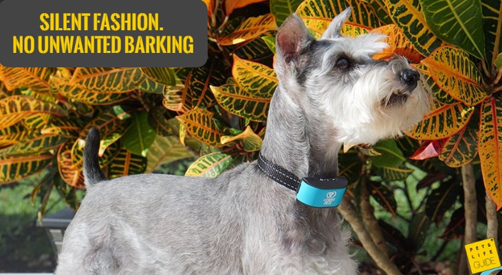 stop barking collar for miniature schnauzer
