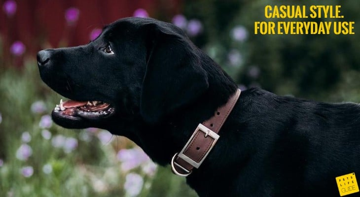 basic dog collar for Lab