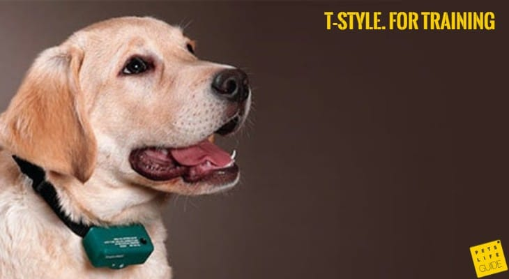E-collar for Labrador