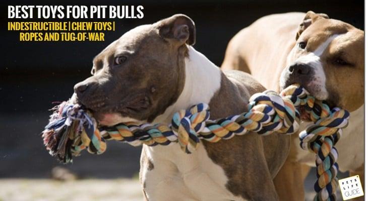 best toys for pit bulls