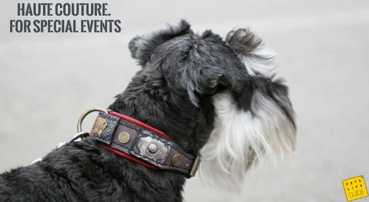 leather collar for miniature schnauzer