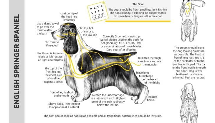 Grooming Chart For Springer Spaniel