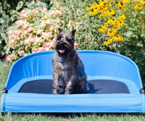 Gen7Pets Trailblazer Blue Cool-Air Cot for Dogs, by Petmate review